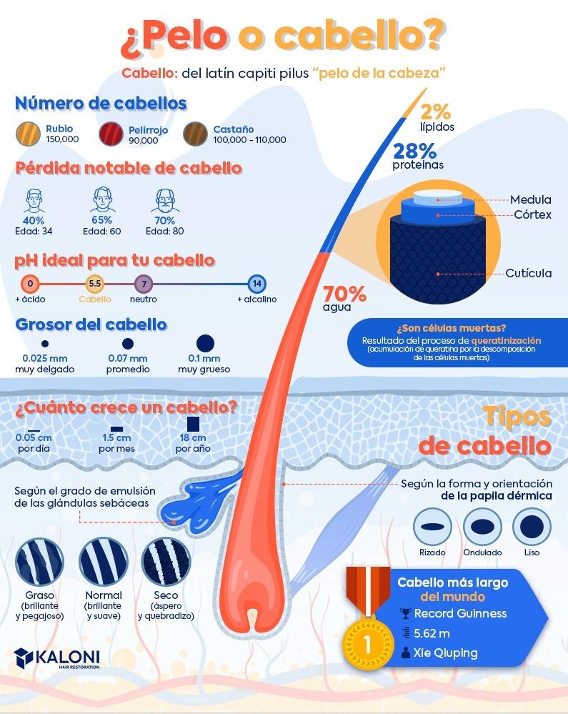 infografia-del-cabello