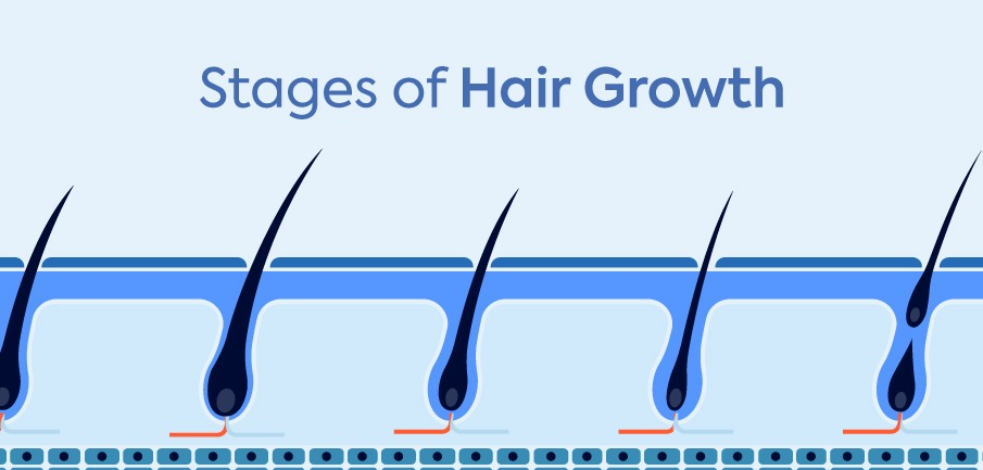 stages-hair-growth-1